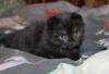 Поздравляем Нюсю с рождением доченьки! - последнее сообщение от masya